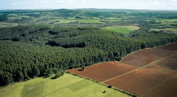 CMPC afirma que terras foram compradas antes da nova regulamentação