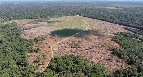 Uma emenda de Plenário restringiu o plantio a áreas que já estivessem degradadas (sem capacidade de regeneração natural)