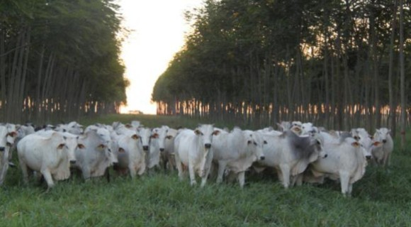 Rodeado por fazendas, Nova Canaã do Norte é um dos 14 municípios mato-grossenses beneficiados , diz senador