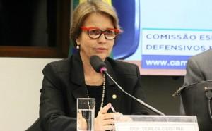 Cabe a Tereza Cristina organizar a pauta de trabalhos da comissão especial